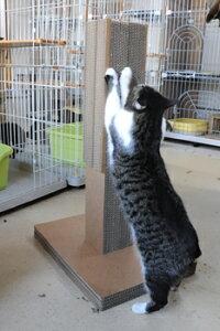 安心の日本製・ペット用品ダンボール製猫(ねこ)の爪とぎ:キャットタワーガリットタワー型4面/スタンダードタイプつめとぎ【あす楽対応商品】