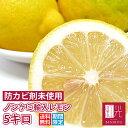 ノンケミレモン 【送料無料】 ノンケミカル輸入レモン 5.0kg (サイズに大小あり) (約40−50個入り) 「北海道・沖縄は+540円」 レモン 柑橘 果物 フルーツ