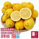 訳あり 国産 レモン 5kg 鈴木さんらの国産レモン B品 「沖縄への配送は+1100円」