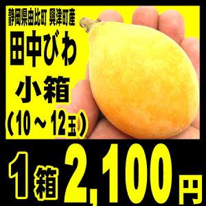 静岡県清水区由比町興津町の温暖な斜面で栽培肉厚で、甘い、おいしい枇杷、ジューシーな田中ビ...