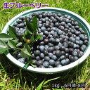 送料無料 山形県産 冷凍 ブルーベリー 約1kg 国産 ブルーベリー フルーツ