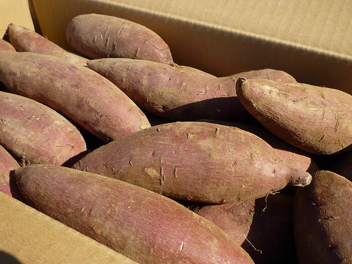 鹿児島産「シルクスイート」5kg Mサイズ(土付き)低農薬 熟成シルクスイート