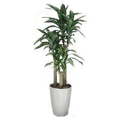 幸福の木1、6(ドラセナ・フラグランス・マッサンゲアーナ) 光触媒 イミテーショングリーン 日…