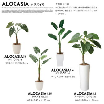 くわず芋1.4(alocasiaodora)光触媒イミテーショングリーン送料無料
