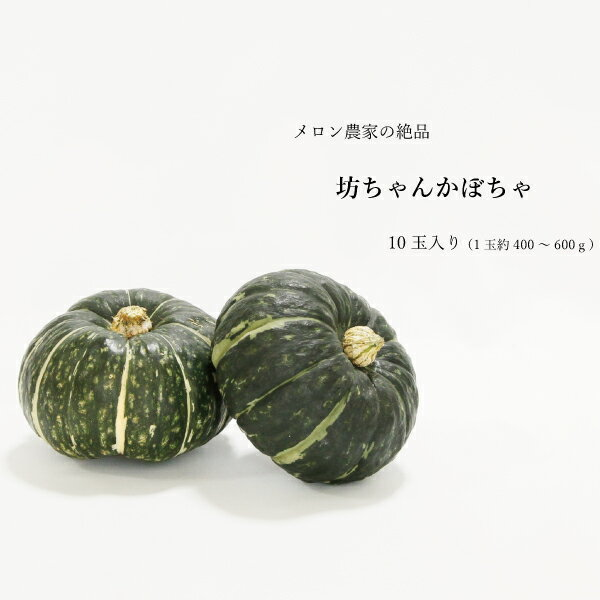 送料無料 坊ちゃん かぼちゃ 10玉入 とれたて 熊本 農家直送 鮮度1番 カボチャ 南瓜 ホクホク 400~600グラム ハウス品 02P05Sep15