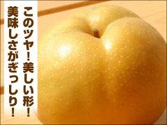 NHKテレビで紹介!幻の梨!「稲城梨」3Kg(4?6個)【送料無料】
