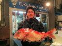徳島県産!「天然鯛(鳴門鯛)」丸々1匹(ビッッグサイズの約2Kg)【送料込】