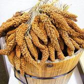フランス産 赤粟穗 100g / 量り売り / ( 鳥 、とり 、 餌 、 えさ 、 フード 、 ごはん )