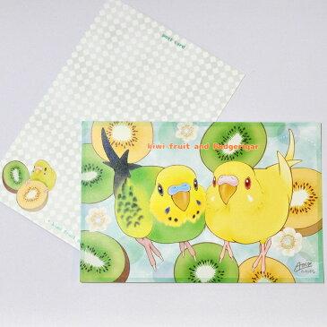 とっ・とっ・pi♪ / ポストカード 「 kiwi 」 / セキセイインコ / 197A0213 ◆ クロネコ DM便 可能( 鳥用品 鳥グッズ 鳥 とり トリ )