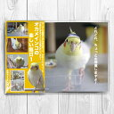 TOMO YAMASHITA DESIGN STUDIO. / オカメインコの楽しい毎日1 ポストカード4枚セット / 195A0106 ネコポス 対応可能 ( BIRDMORE バードモア 鳥用品 鳥グッズ 雑貨 グッズ 鳥 とり トリ インコ プレゼント )