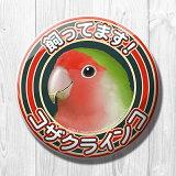 TOMO YAMASHITA DESIGN STUDIO. / 飼ってます缶バッジ  「 コザクラインコ ノーマル 」 / 195A0121 ネコポス 対応可能 ( BIRDMORE バードモア 鳥用品 鳥グッズ 雑貨 グッズ 鳥 とり トリ インコ プレゼント )