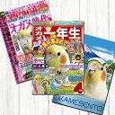TOMO YAMASHITA DESIGN STUDIO. B3ポスター 雑誌シリーズ5 3枚セット 195A0392 BIRDMORE バードモア CRAFT GARDEN 鳥用品 鳥グッズ 雑貨 鳥 とり プレゼント