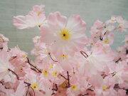 桜150cm(人工樹木/造花/サクラ/コンパネ仕様)