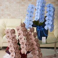 ワンランク上の祝い花は送料無料