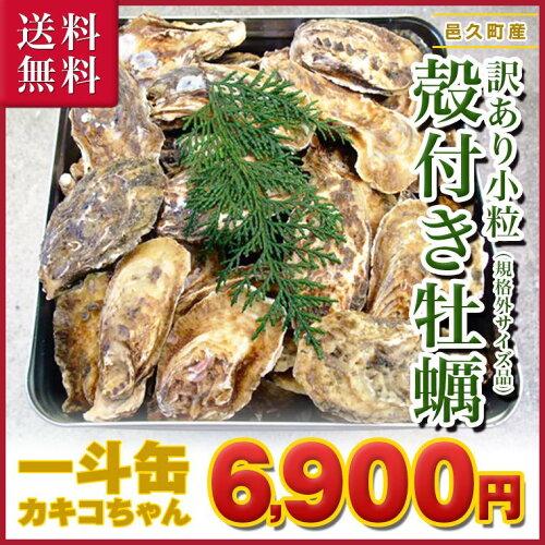 ■岡山県 邑久産 曙牡蠣(規格外サイズ品) カキコちゃん| 一斗缶250個(1...