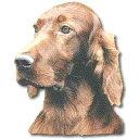 ◆アイリッシュセッター顔◆オデル・ドッグステッカー