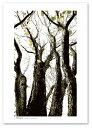 A2サイズ ポスター 【And-c】 アート 植物,花 モノクロ 白黒...
