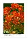 A2サイズ デザインポスター 【Dahlia】 インテリア アート 植...