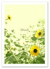 A2サイズ ポスター 【Girasole】インテリア/ひまわり/植物,花ポスター/Interi…
