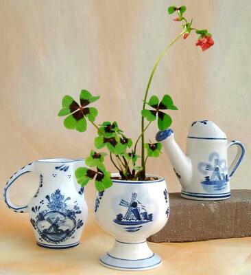幸せを呼ぶ!四つ葉のクローバー栽培セット