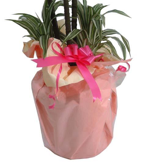 花・観葉植物, 観葉植物 1087