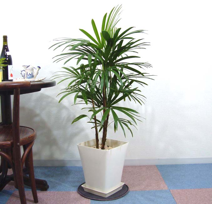 花・観葉植物, 観葉植物  8 G