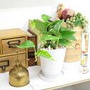 【送料無料】空気も浄化するといわれているポトス・ホワイト陶器鉢 丸ロング+陶器製のお皿付き