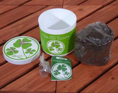 「幸せ」を育てる四葉のクローバー栽培セット(ミニ)