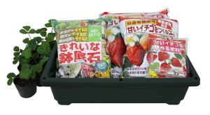 甘いいちごを収穫したい♪ いちご(品種:とよのか) 栽培セット(菜園ボックス、他セット)