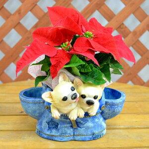 真っ赤なポインセチアとかわいい子犬のポットポインセチアと可愛い子犬ポット