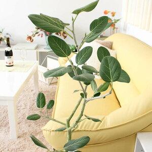 【送料無料】フィカスベンガレンシス(ベルガルゴム)のホワイト陶器鉢8号 中型サイズの観葉植物