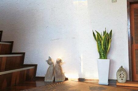 空気を浄化するといわれているサンスベリアのホワイト陶器鉢7号ストレート