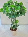 光触媒 観葉植物 造花 ホンコン 編み アートフラワー 送料無料 ミニ 空気清浄機 インテリア ギフト プレゼント 贈り物 お誕生日 記念日…