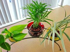 ★NEWデザインのハイドロカルチャー観葉植物です♪★ハイドロカルチャー観葉植物 アーチ レトロ...