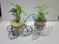 ハイドロカルチャー観葉植物 自転車 素敵なデザインの自転車に観葉植物を植え込みました。インテリアのちょっとしたアクセントにオススメです。