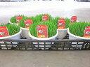 ペットグラス 1ケース8鉢入り(大きめの5号鉢) ワンワン、ニャンニャンが大好きなお腹をケアする、整腸作用抜群の安心・安全な草です。 その1