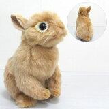 [ハンサ][7022]ネザーランド・ドワーフ 21-netherland dwarf bunny-ウサギ・ラビット