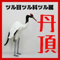 [ハンサ]タンチョウ[5720]HANSAのリアルな動物ぬいぐるみです。あの民話のモデルになったツルです。儚げな立ち姿!