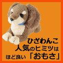 サンレモン ひざわんこミニチュアダックス【ブラウン】[P-3022]ミニチュアダックス茶色い犬