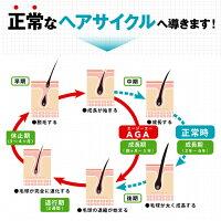 AGA、正常なヘアサイクル、育毛サイクル、発毛サイクル、成長期、毛根、毛球