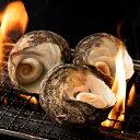 サザエ さざえ (殻入り) 1kg (4〜5個) 天然サザエ 香川県産 冷蔵 [送料無料 海鮮 貝 バーベキュー BBQ 壺焼き 貝類 ] グルメ 2
