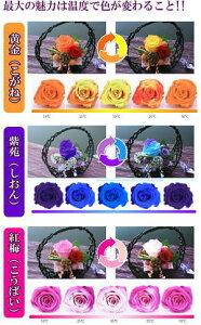 ●色が変わる魔法のバラ『和(なごみ)』●プリザーブドフラワー和風バージョン★
