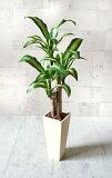 【送料無料】N幸福の木:85cm【smtb-s】【造花】【人工観葉植物】【光触媒】【RCP】【vd_dl19】
