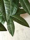 【送料無料】パキラ120cm【人工観葉植物】 【フェイクグリーン】 【おしゃれ】 【観葉植物】 【造花】 【光触媒】 【大型】 3