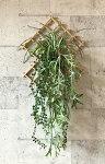和風・オリヅルランと多肉植物の壁掛け