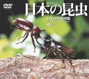 日本の昆虫/DVD映像図鑑