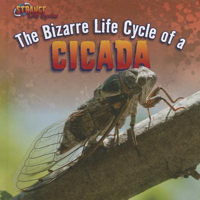 洋書, BOOKS FOR KIDS The Bizarre Life Cycle of a Cicada STRANGE LIFE CYCLES BIZARRE LI Strange Life Cycles (Gareth Stevens) Greg Roza