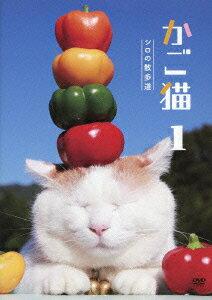 【送料無料】かご猫1 シロの散歩道