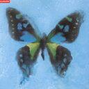 男性のカラオケで女子ウケのいい曲 「ポルノフラフィティ」の「アゲハ蝶」を収録したCDのジャケット写真。
