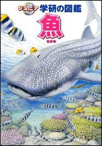 【送料無料】魚